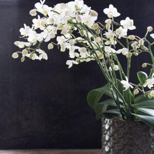 Plantearrangementer